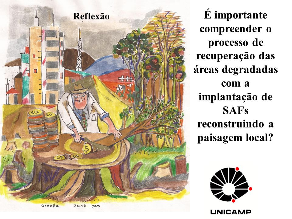 É importante compreender o processo de recuperação das áreas degradadas com a implantação de SAFs reconstruindo a paisagem local? Reflexão