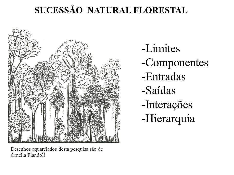 SUCESSÃO NATURAL FLORESTAL Desenhos aquarelados desta pesquisa são de Ornella Flandoli -Limites -Componentes -Entradas -Saídas -Interações -Hierarquia