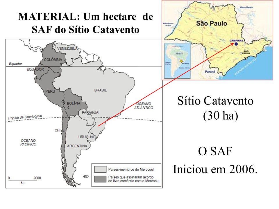 Todas as espécies do SAF Catavento