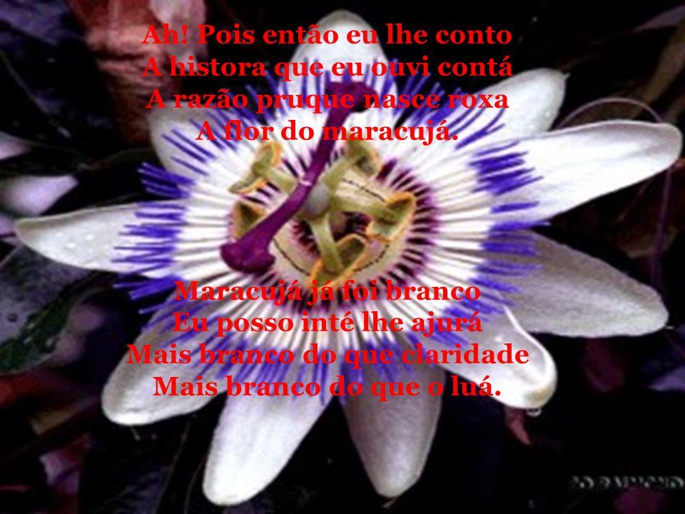 A FLOR DE MARACUJÁ Catulo da Paixão Cearense Conversando com um sertanejo Perto de um pé de maracujá Eu perguntei, diga-me caro sertanejo Por que razão nasce roxa a flor do maracujá?