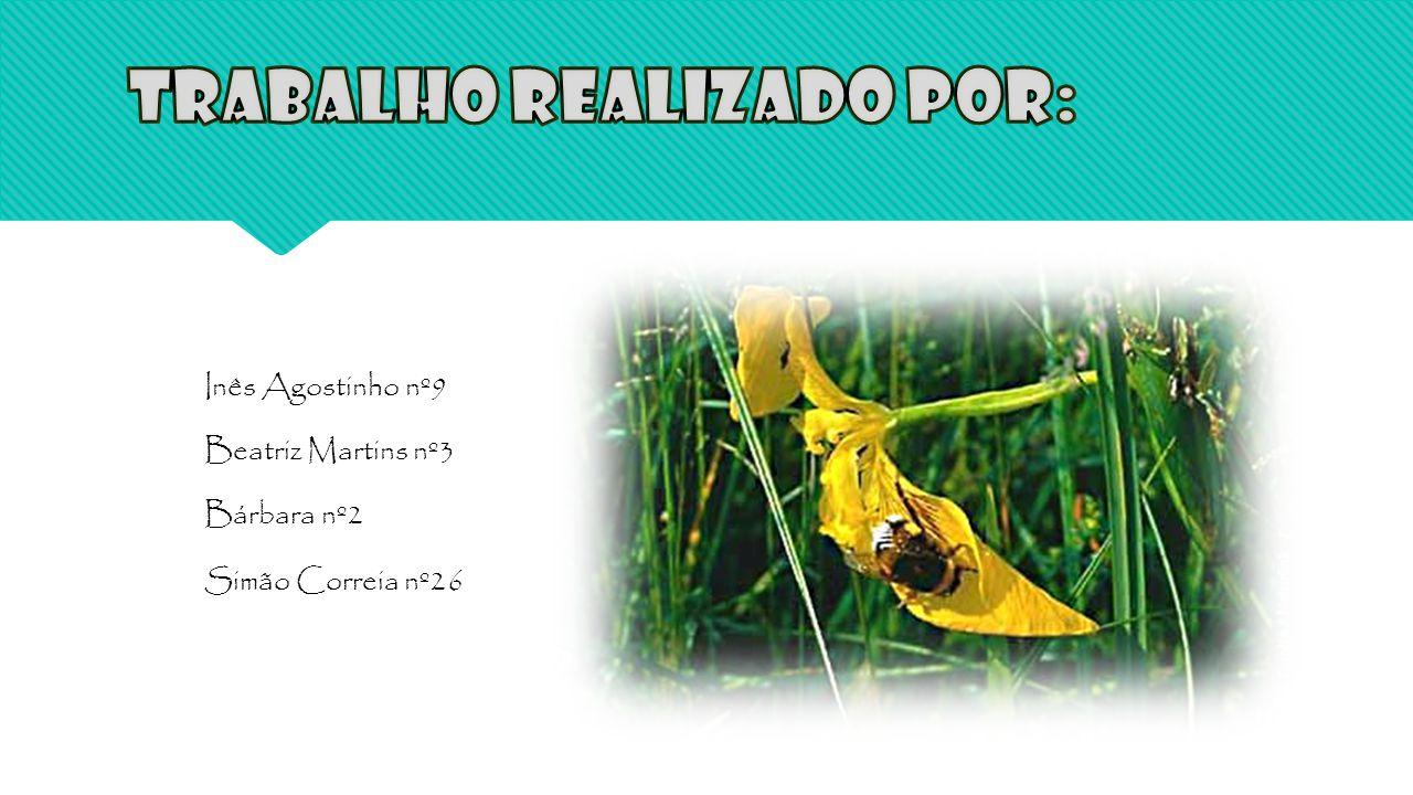 Inês Agostinho nº9 Beatriz Martins nº3 Bárbara nº2 Simão Correia nº26