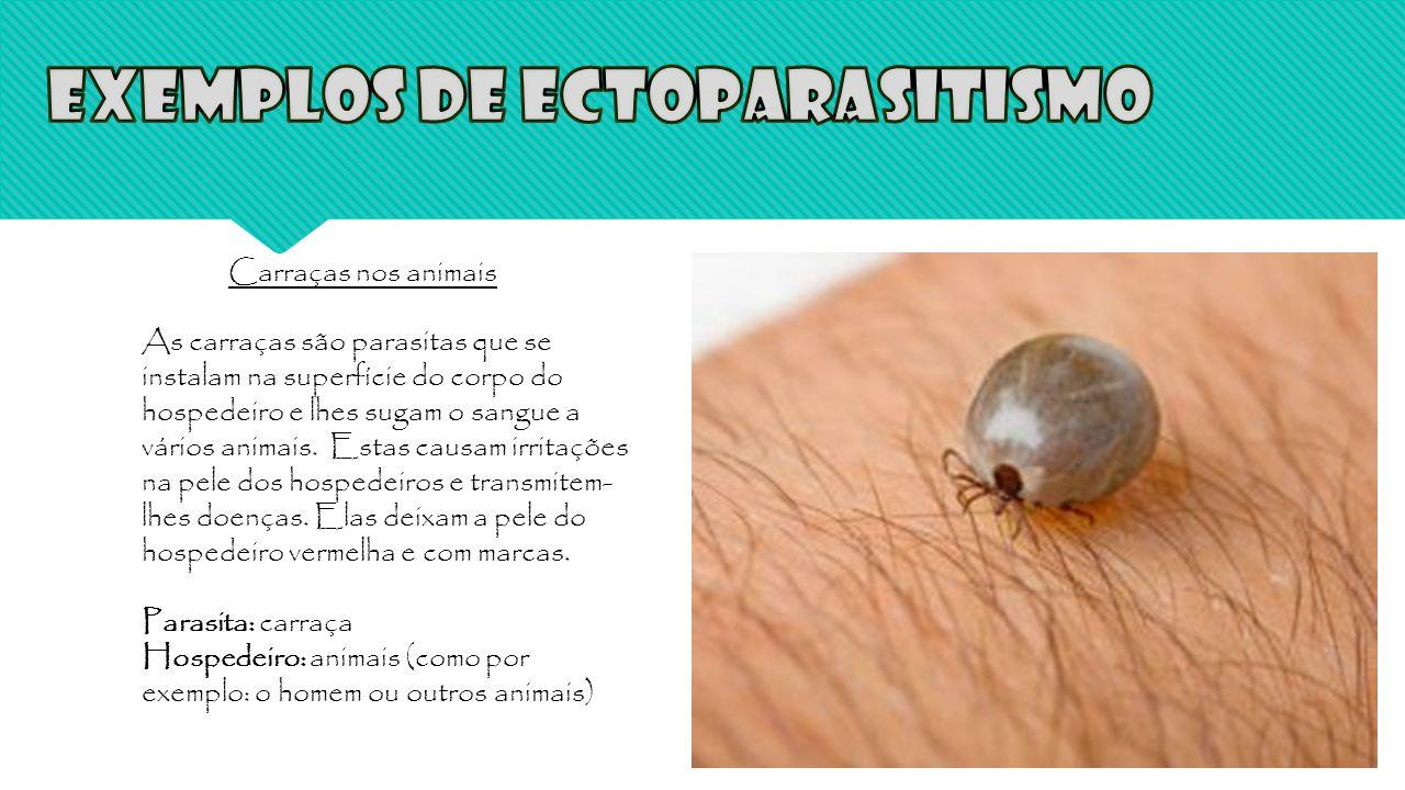 Carraças nos animais As carraças são parasitas que se instalam na superfície do corpo do hospedeiro e lhes sugam o sangue a vários animais. Estas caus