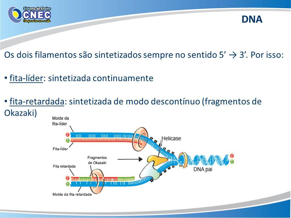 Os dois filamentos são sintetizados sempre no sentido 5' → 3'.