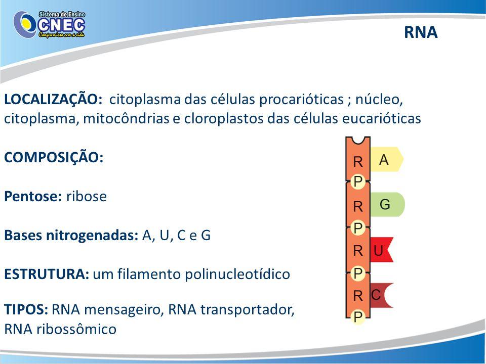 LOCALIZAÇÃO: citoplasma das células procarióticas ; núcleo, citoplasma, mitocôndrias e cloroplastos das células eucarióticas COMPOSIÇÃO: Pentose: ribose Bases nitrogenadas: A, U, C e G ESTRUTURA: um filamento polinucleotídico TIPOS: RNA mensageiro, RNA transportador, RNA ribossômico RNA