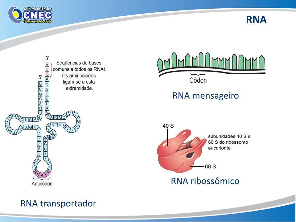 RNA mensageiro RNA ribossômico RNA transportador RNA