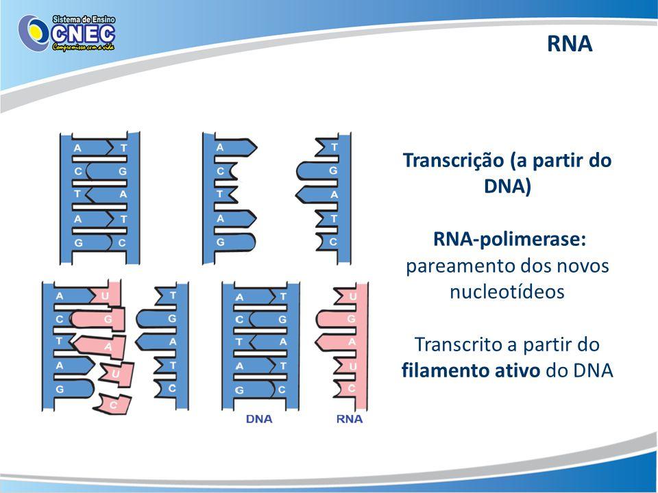 Transcrição (a partir do DNA) RNA-polimerase: pareamento dos novos nucleotídeos Transcrito a partir do filamento ativo do DNA RNA