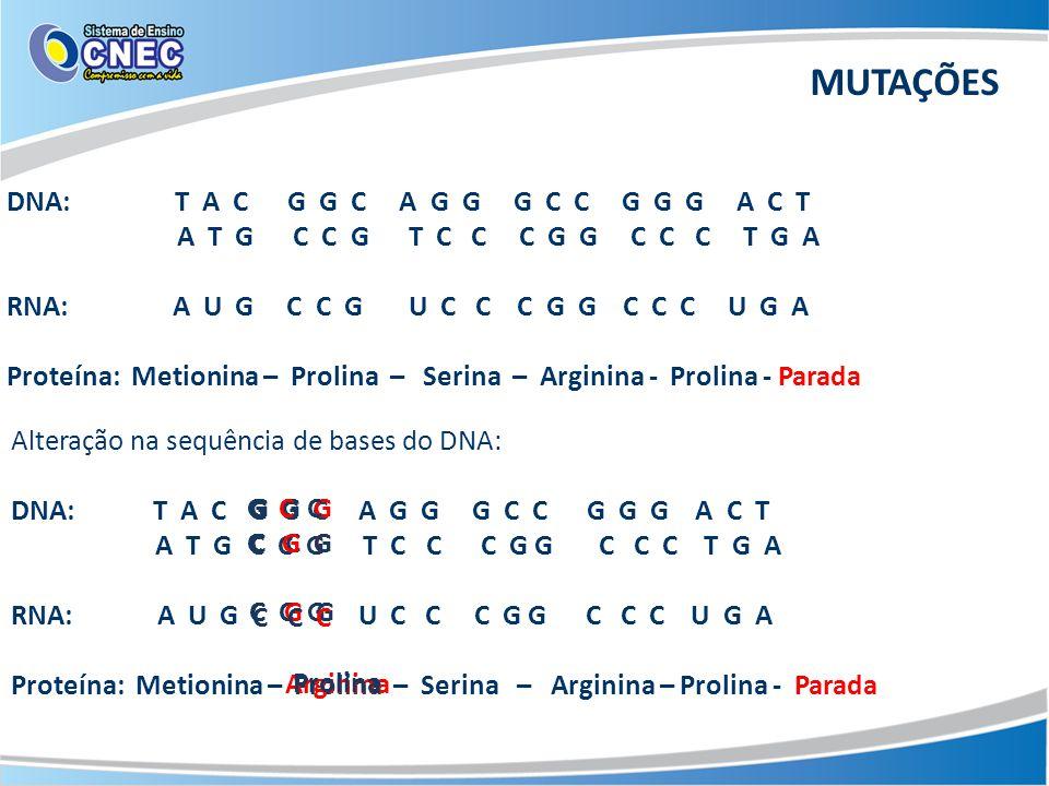 MUTAÇÕES DNA: T A C G G C A G G G C C G G G A C T A T G C C G T C C C G G C C C T G A RNA: A U G C C G U C C C G G C C C U G A Proteína: Metionina – Prolina – Serina – Arginina - Prolina - Parada Alteração na sequência de bases do DNA: DNA: T A C A G G G C C G G G A C T A T G T C C C G G C C C T G A RNA: A U G U C C C G G C C C U G A Proteína: Metionina – – Serina – Arginina – Prolina - Parada G G C C C G Prolina G G G C C C C G G Arginina G C C C G G C C C Prolina
