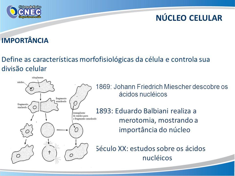 NÚCLEO CELULAR IMPORTÂNCIA Define as características morfofisiológicas da célula e controla sua divisão celular 1869: Johann Friedrich Miescher descobre os ácidos nucléicos 1893: Eduardo Balbiani realiza a merotomia, mostrando a importância do núcleo Século XX: estudos sobre os ácidos nucléicos