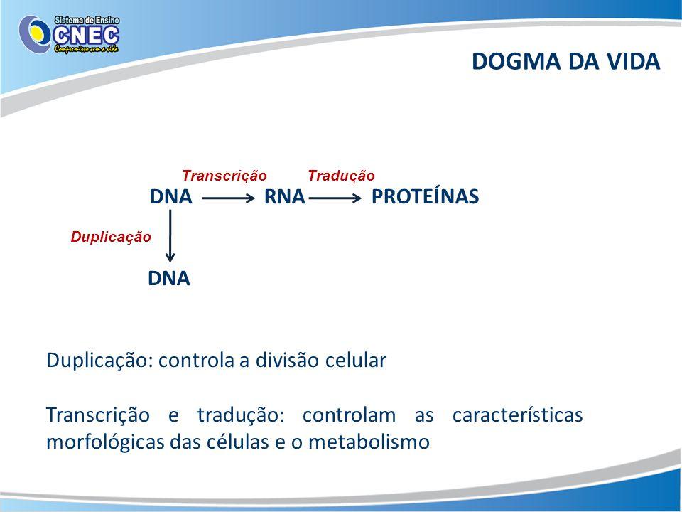 DNA RNA PROTEÍNAS DNA Duplicação: controla a divisão celular Transcrição e tradução: controlam as características morfológicas das células e o metabolismo TranscriçãoTradução Duplicação DOGMA DA VIDA