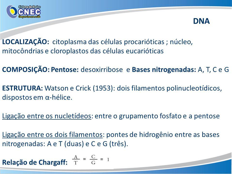 DNA LOCALIZAÇÃO: citoplasma das células procarióticas ; núcleo, mitocôndrias e cloroplastos das células eucarióticas COMPOSIÇÃO: Pentose: desoxirribose e Bases nitrogenadas: A, T, C e G ESTRUTURA: Watson e Crick (1953): dois filamentos polinucleotídicos, dispostos em α-hélice.
