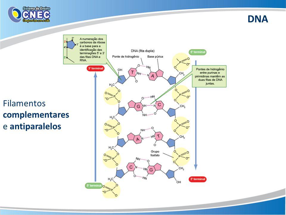Filamentos complementares e antiparalelos DNA