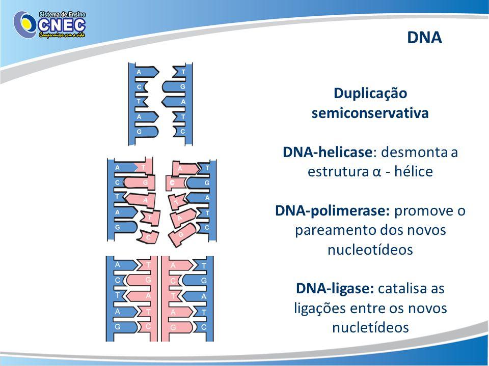 Duplicação semiconservativa DNA-helicase: desmonta a estrutura α - hélice DNA-polimerase: promove o pareamento dos novos nucleotídeos DNA-ligase: catalisa as ligações entre os novos nucletídeos DNA