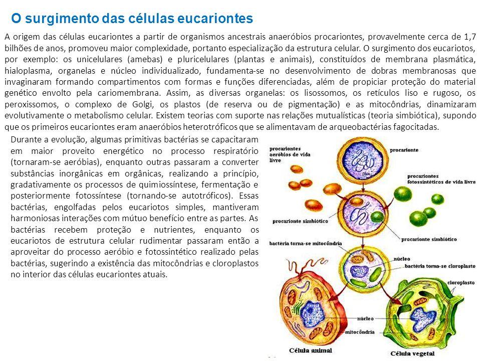 A origem das células eucariontes a partir de organismos ancestrais anaeróbios procariontes, provavelmente cerca de 1,7 bilhões de anos, promoveu maior complexidade, portanto especialização da estrutura celular.