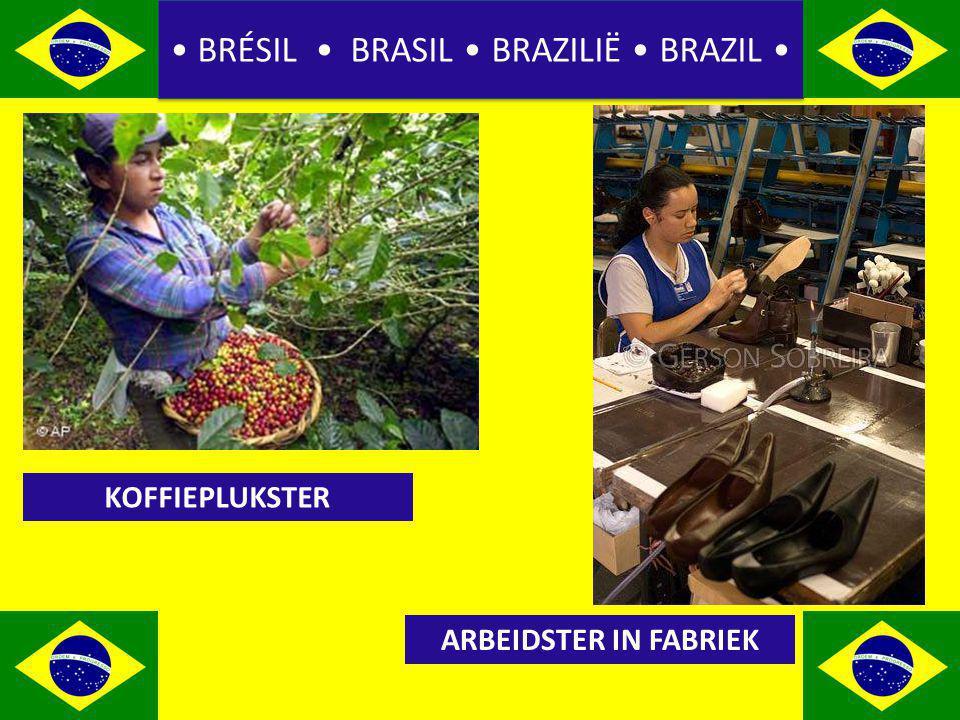 BRÉSIL BRASIL BRAZILIË BRAZIL KOFFIEPLUKSTER ARBEIDSTER IN FABRIEK