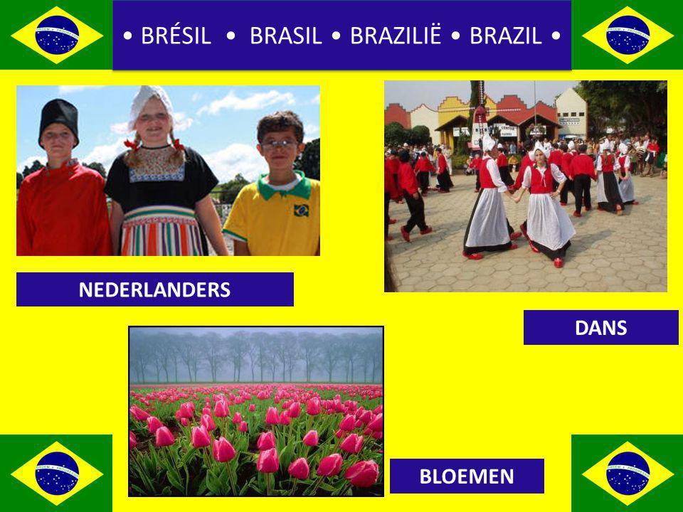 BRÉSIL BRASIL BRAZILIË BRAZIL NEDERLANDERS BLOEMEN DANS