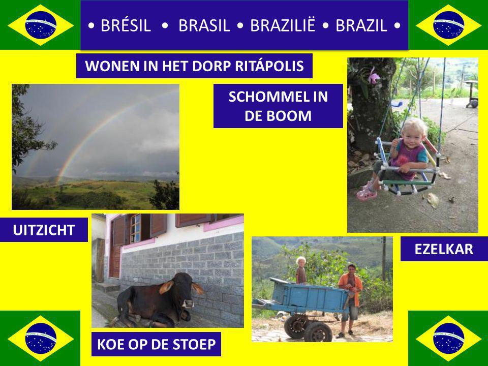 BRÉSIL BRASIL BRAZILIË BRAZIL WONEN IN HET DORP RITÁPOLIS UITZICHT SCHOMMEL IN DE BOOM KOE OP DE STOEP EZELKAR