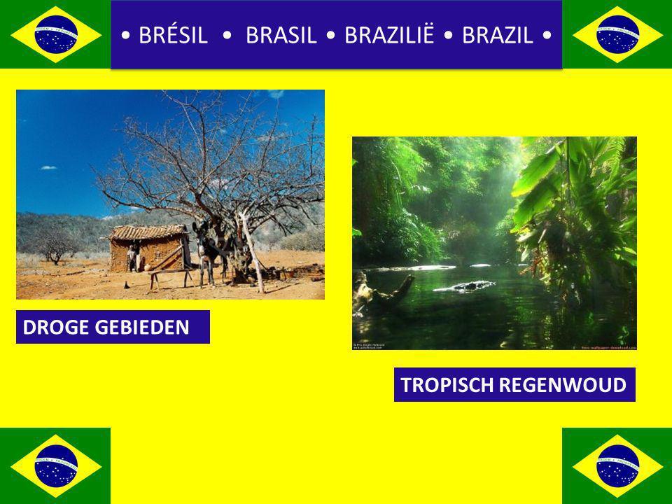 BRÉSIL BRASIL BRAZILIË BRAZIL DROGE GEBIEDEN TROPISCH REGENWOUD