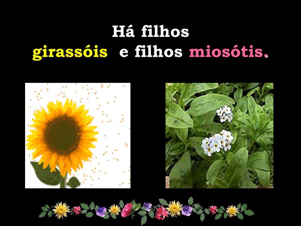 miosótis O miosótis quando se vira, vira errado. Precisa de atenção redobrada. O girassol girassol se vira... e como se vira!