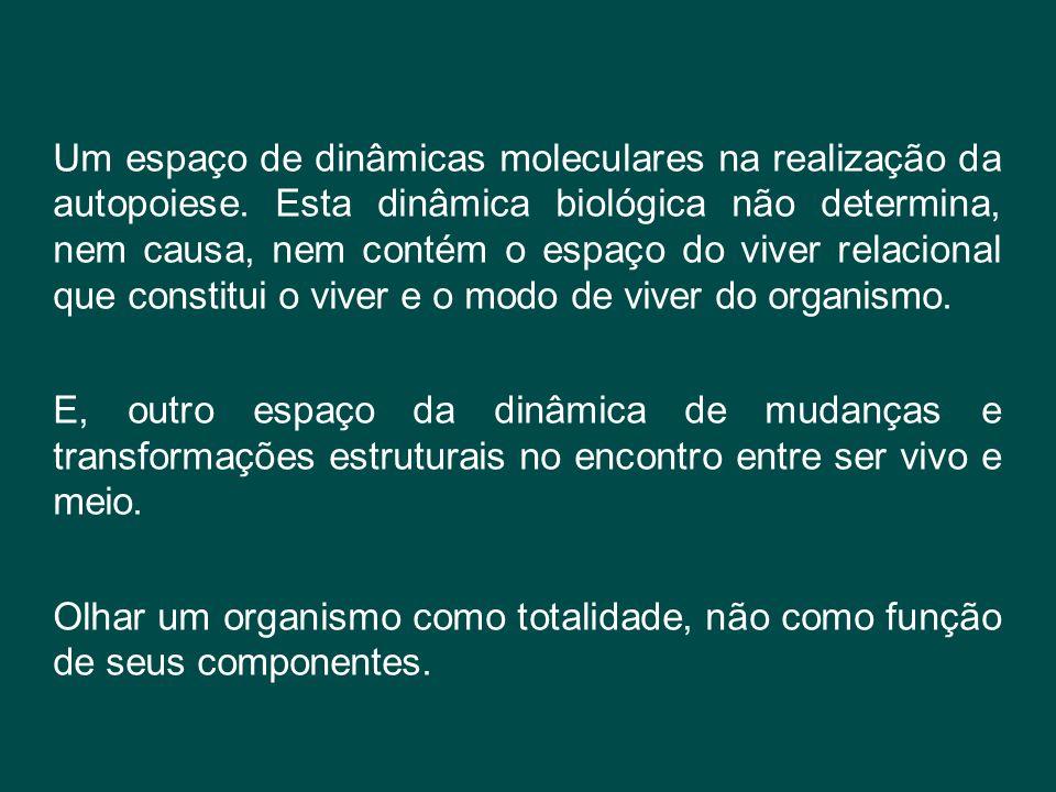 Um espaço de dinâmicas moleculares na realização da autopoiese. Esta dinâmica biológica não determina, nem causa, nem contém o espaço do viver relacio