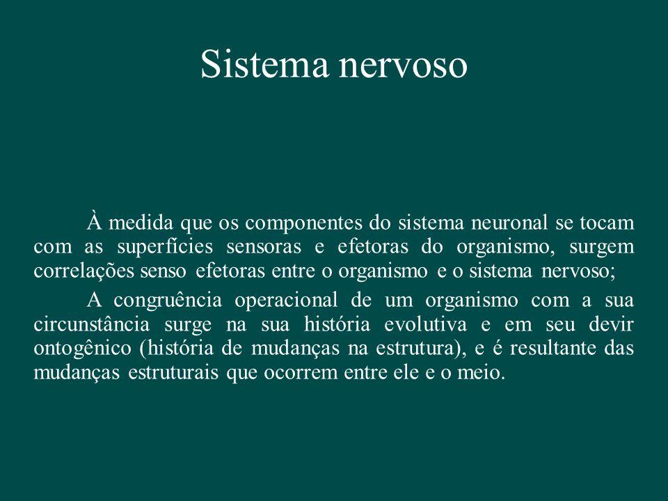 Sistema nervoso À medida que os componentes do sistema neuronal se tocam com as superfícies sensoras e efetoras do organismo, surgem correlações senso