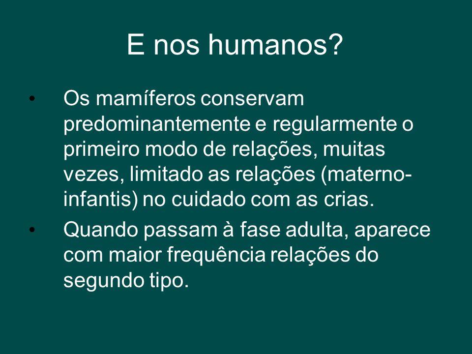 E nos humanos? • Os mamíferos conservam predominantemente e regularmente o primeiro modo de relações, muitas vezes, limitado as relações (materno- inf