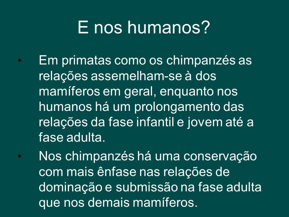 E nos humanos? • Em primatas como os chimpanzés as relações assemelham-se à dos mamíferos em geral, enquanto nos humanos há um prolongamento das relaç