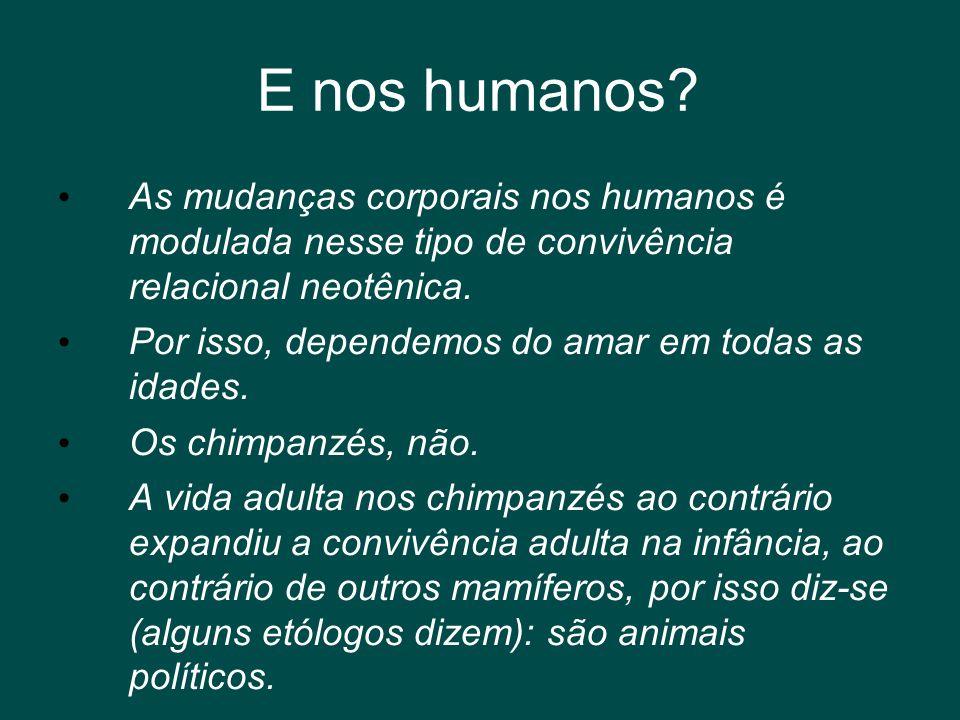 E nos humanos? • As mudanças corporais nos humanos é modulada nesse tipo de convivência relacional neotênica. • Por isso, dependemos do amar em todas