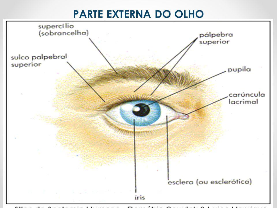 PARTE EXTERNA DO OLHO