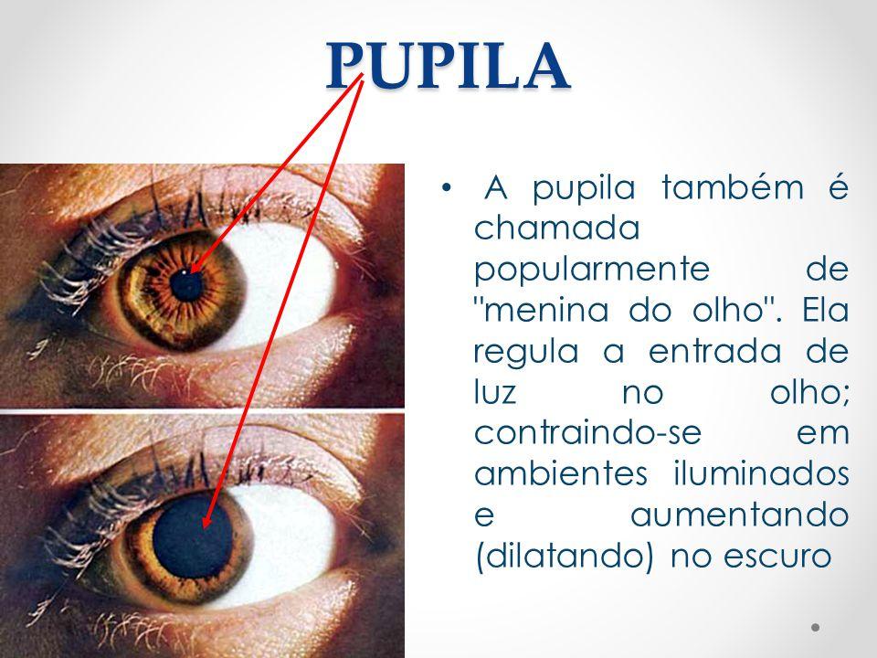 PUPILA • A pupila também é chamada popularmente de