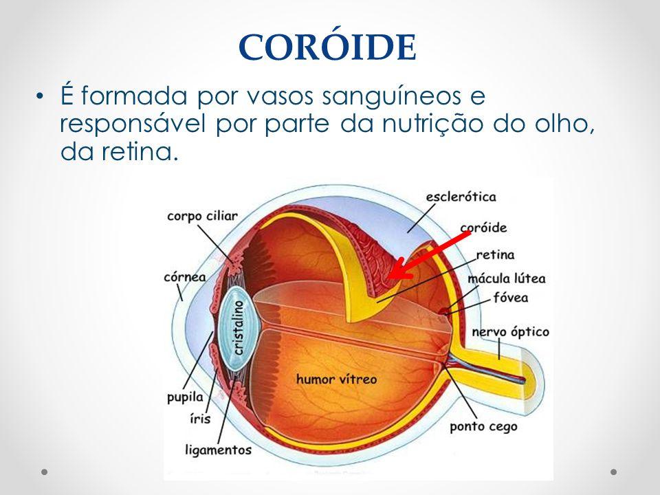 CORÓIDE • É formada por vasos sanguíneos e responsável por parte da nutrição do olho, da retina.