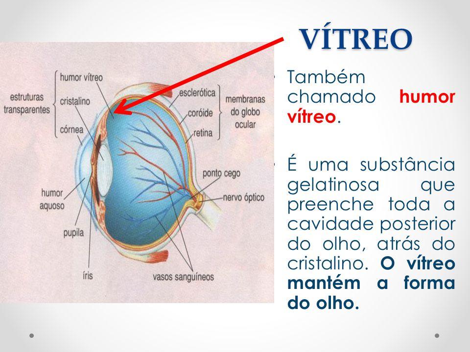 VÍTREO • Também chamado humor vítreo. • É uma substância gelatinosa que preenche toda a cavidade posterior do olho, atrás do cristalino. O vítreo mant