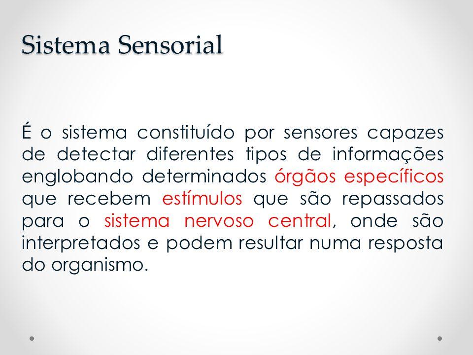 É o sistema constituído por sensores capazes de detectar diferentes tipos de informações englobando determinados órgãos específicos que recebem estímu