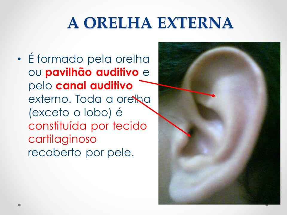 A ORELHA EXTERNA • É formado pela orelha ou pavilhão auditivo e pelo canal auditivo externo. Toda a orelha (exceto o lobo) é constituída por tecido ca