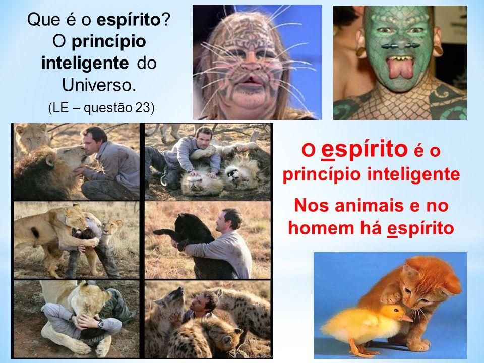 O espírito é o princípio inteligente Nos animais e no homem há espírito Que é o espírito.