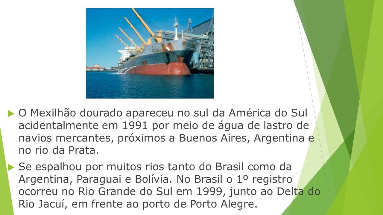  O Mexilhão dourado apareceu no sul da América do Sul acidentalmente em 1991 por meio de água de lastro de navios mercantes, próximos a Buenos Aires,