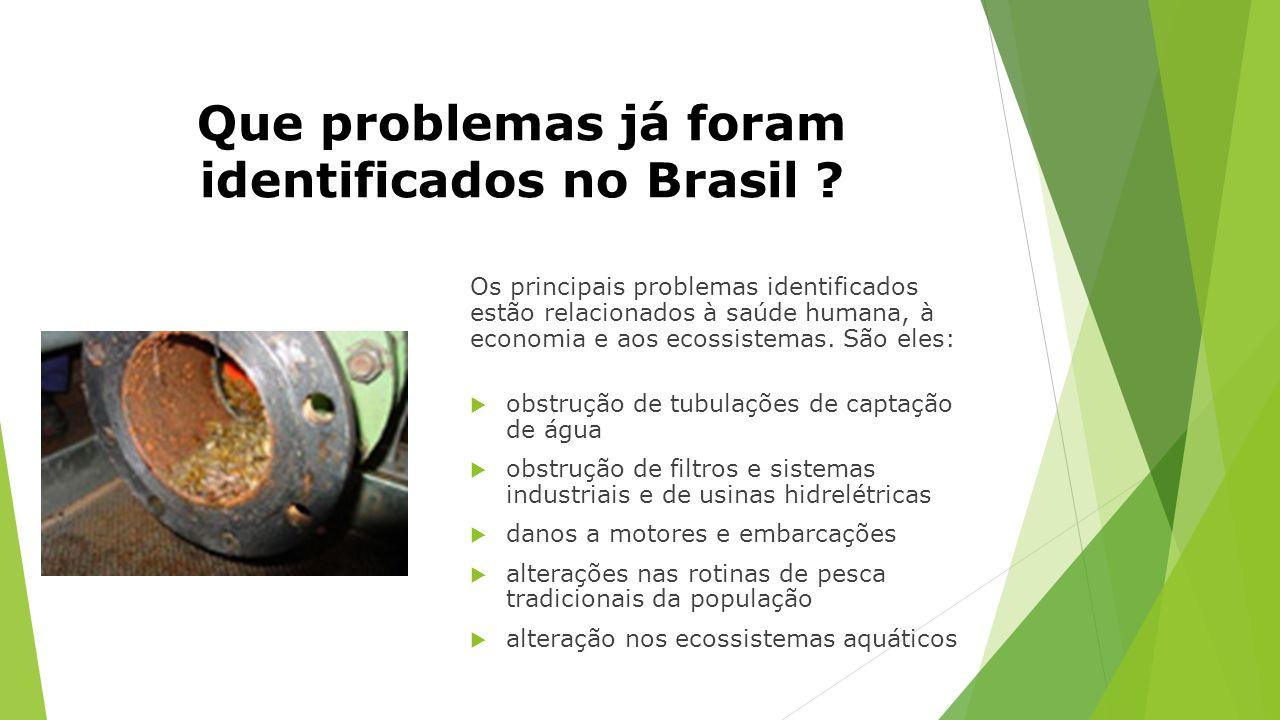 Que problemas já foram identificados no Brasil ? Os principais problemas identificados estão relacionados à saúde humana, à economia e aos ecossistema