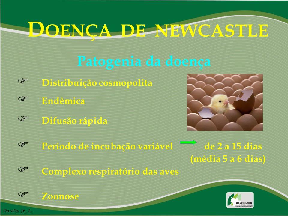 D OENÇA DE NEWCASTLE F Distribuição cosmopolita F Endêmica F Difusão rápida F Período de incubação variável de 2 a 15 dias (média 5 a 6 dias) F Comple