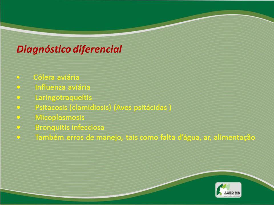 Diagnóstico diferencial  Cólera aviária  Influenza aviária  Laringotraqueítis  Psitacosis (clamidiosis) (Aves psitácidas )  Micoplasmosis  Bronq