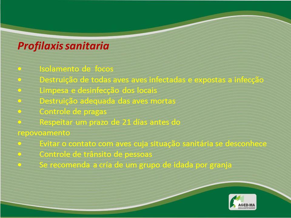 Profilaxis sanitaria  Isolamento de focos  Destruição de todas aves aves infectadas e expostas a infecção  Limpesa e desinfecção dos locais  Destr