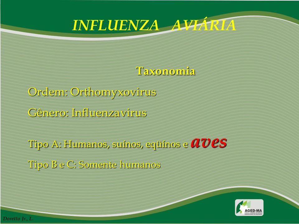 INFLUENZA AVIÁRIA Taxonomia Ordem: Orthomyxovirus Gênero: Influenzavirus Tipo A: Humanos, suínos, eqüínos e aves Tipo B e C: Somente humanos Doretto J
