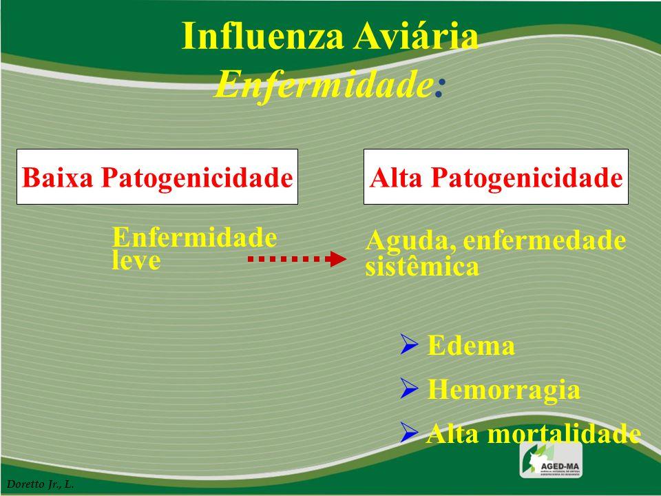 Influenza Aviária Enfermidade: Alta PatogenicidadeBaixa Patogenicidade Enfermidade leve Aguda, enfermedade sistêmica  Edema  Hemorragia  Alta morta