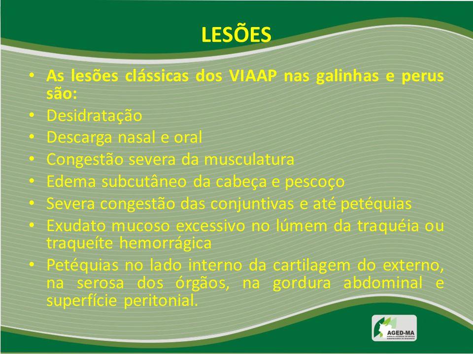 LESÕES As lesões clássicas dos VIAAP nas galinhas e perus são: Desidratação Descarga nasal e oral Congestão severa da musculatura Edema subcutâneo da