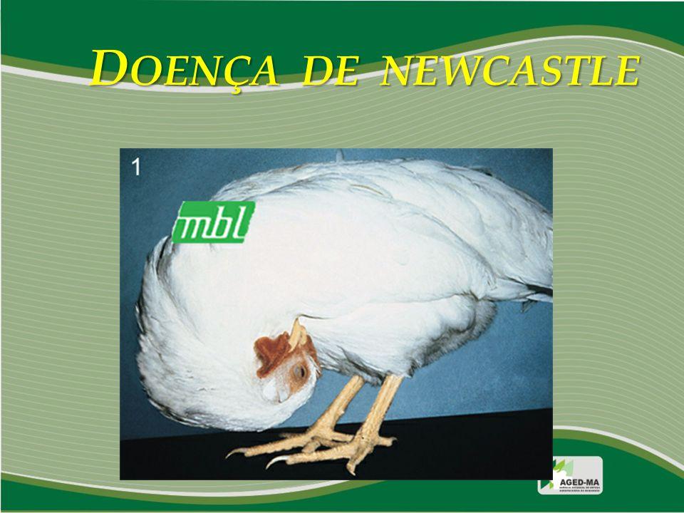 D OENÇA DE NEWCASTLE LESÕES Doretto Jr., L.