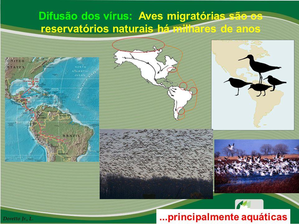 Difusão dos vírus: Aves migratórias são os reservatórios naturais há milhares de anos...principalmente aquáticas Doretto Jr., L.