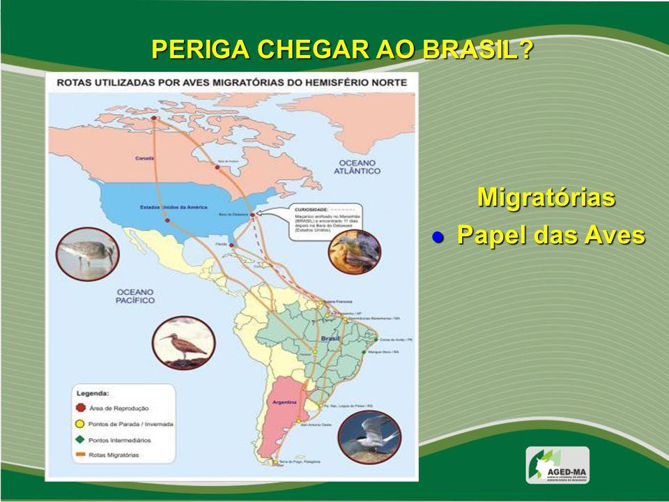 PERIGA CHEGAR AO BRASIL? Migratórias Papel das Aves Papel das Aves