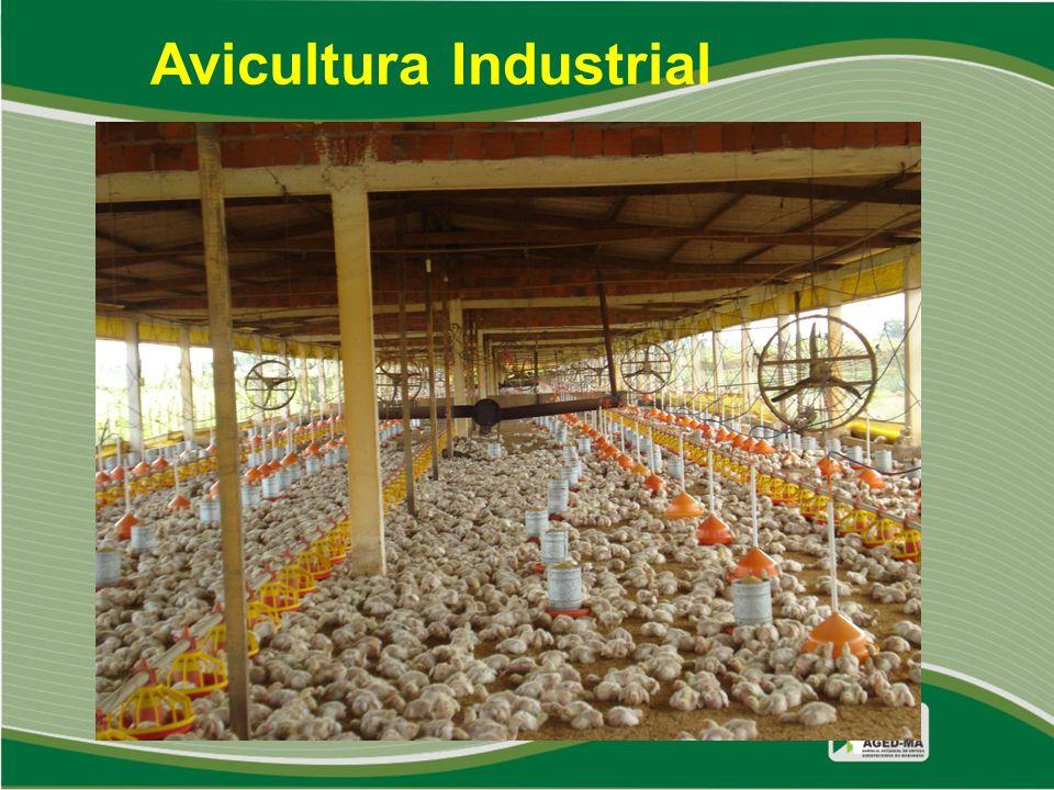 Avicultura Industrial
