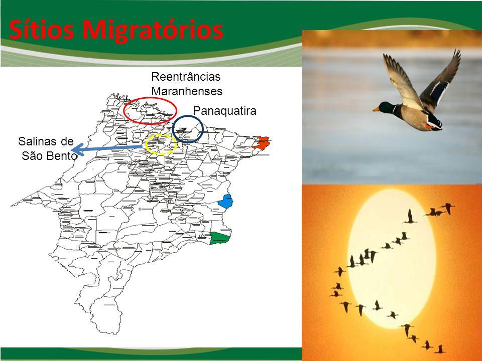 Sítios Migratórios Reentrâncias Maranhenses Panaquatira Salinas de São Bento