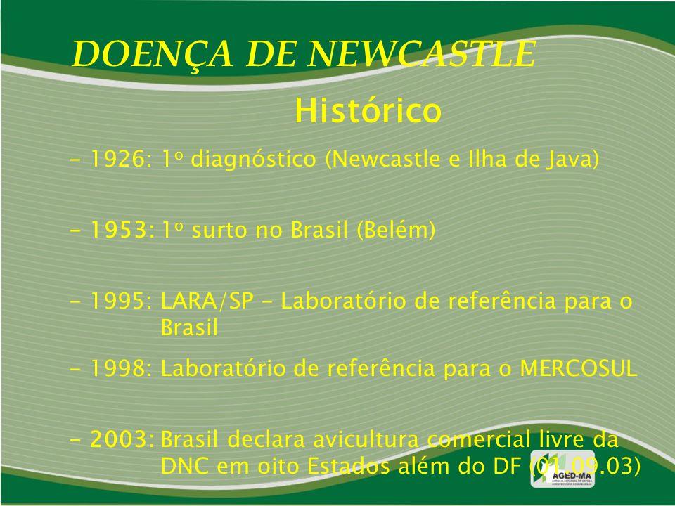 DOENÇA DE NEWCASTLE Histórico - 1926: 1 o diagnóstico (Newcastle e Ilha de Java) - 1953: 1 o surto no Brasil (Belém) - 1995: LARA/SP - Laboratório de