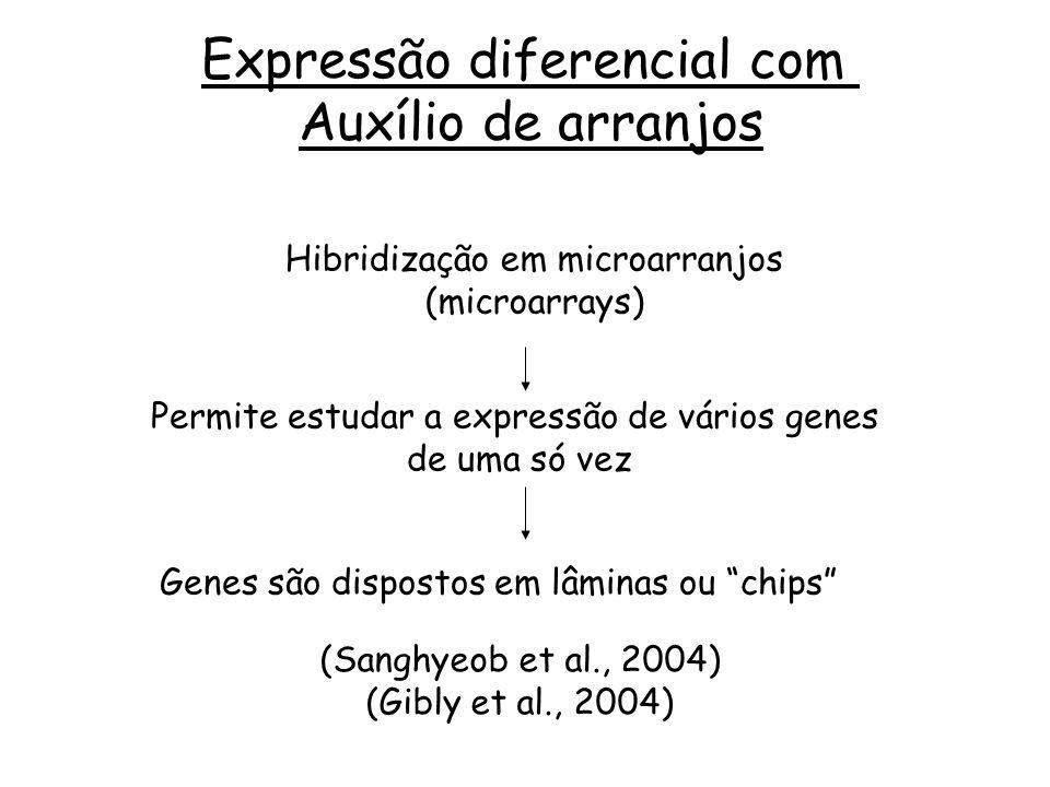Expressão diferencial com Auxílio de arranjos Hibridização em microarranjos (microarrays) Permite estudar a expressão de vários genes de uma só vez Ge