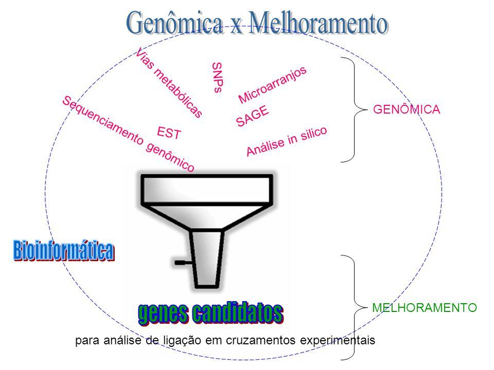 EST Vias metabólicas SAGE Análise in silico SNPs GENÔMICA MELHORAMENTO para análise de ligação em cruzamentos experimentais Microarranjos Sequenciamen